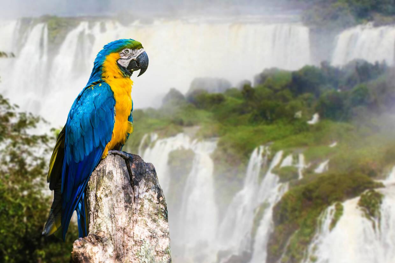 Nature - Circuit Lumière du Brésil et Pantanal Salvador De Bahia Bresil