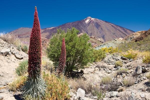 Nature - Circuit Ténérife Saveur Rando 4* Tenerife Canaries