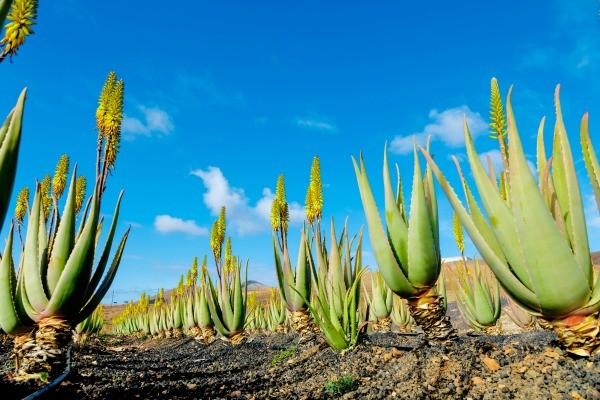 Nature - Circuit FRAM Tour Canario 4* Tenerife Canaries