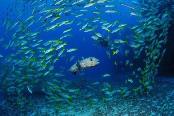 Plongée sous-marine - Échappée active depuis le club Héliades Riu Funana