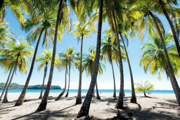 Plage - Circuit Indispensable Costa Rica + extension plage San jose Costa Rica