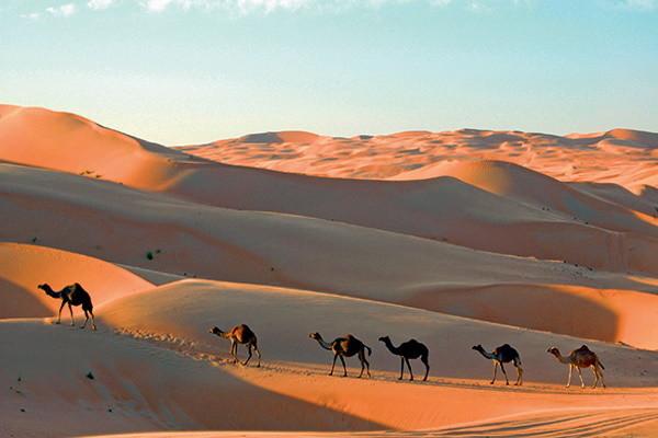 Nature - Circuit Indispensable Emirats Expo Universelle 4* Dubai Dubai et les Emirats