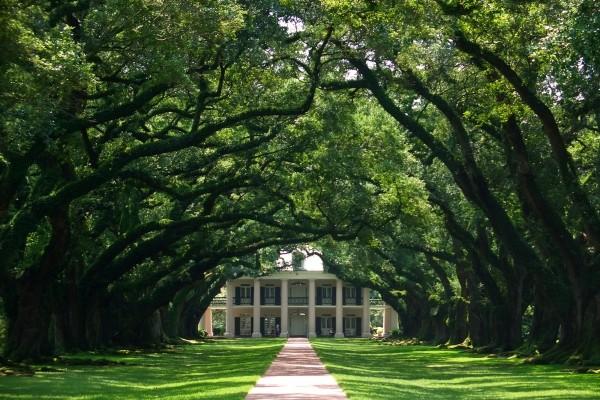 plantation - Le Vieux Sud