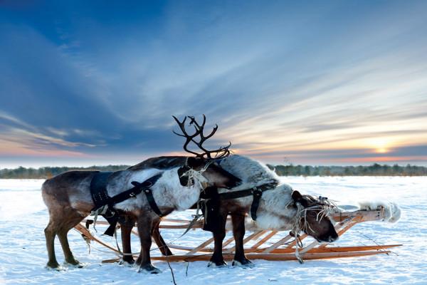 (fictif) - Circuit Charme hivernal de Laponie Ivalo Finlande