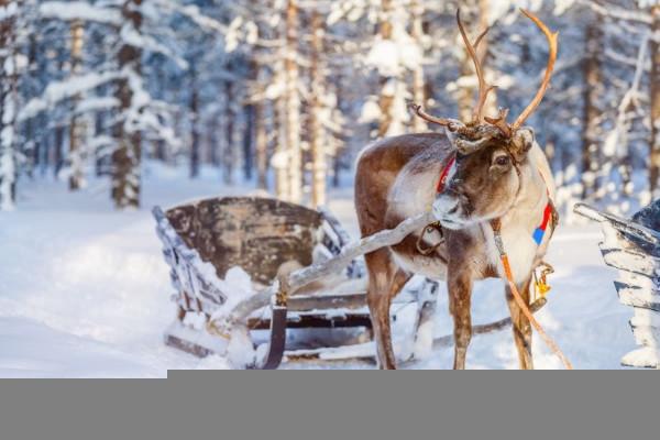 (fictif) - Circuit Magie de Laponie Rovaniemi Finlande