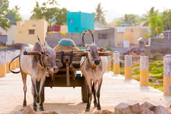 (fictif) - Intensément Rajasthan 3* Delhi Inde