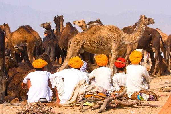 Nature - Circuit Les Incontournables du Rajasthan 3* Delhi Inde