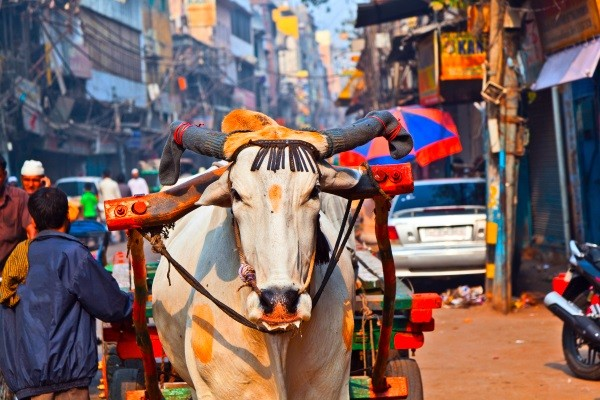 Ville - Circuit Mille Merveilles de l'Inde du Nord via Jaisalmer et Ranakpur Delhi Inde
