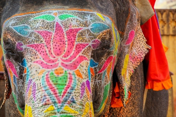 Nature - Circuit Splendeurs de l'Inde du Nord 3* Delhi Inde