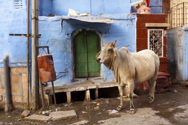 Ville - Circuit Merveilles de l'Inde du Nord