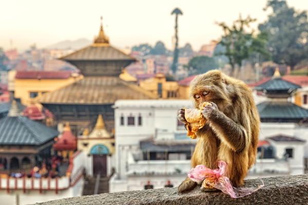 Katmandou - Temple Pashupatinath