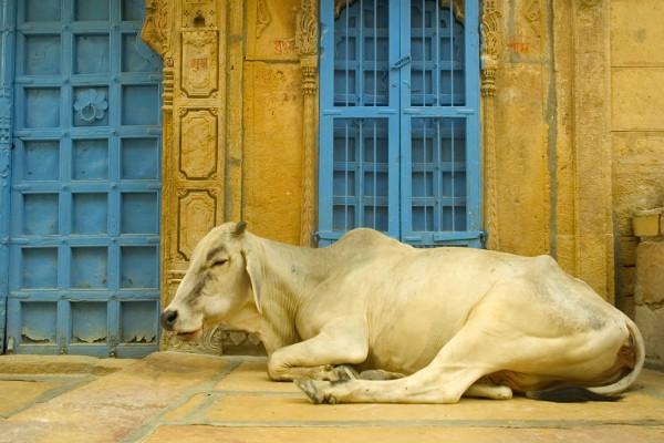 Ville - Circuit Merveilleuse Inde du nord Delhi Inde