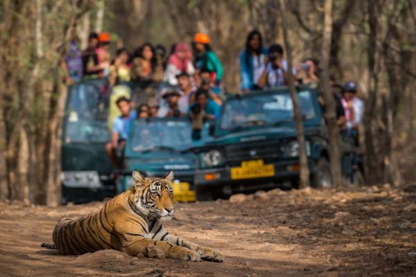 Nature - Circuit Du Taj Mahal à Ranthambhore 3* Delhi Inde