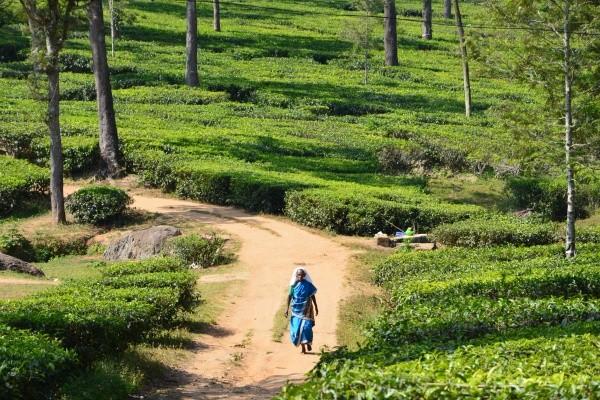Nature - Circuit Lumieres de l'Inde du Sud Madras Inde