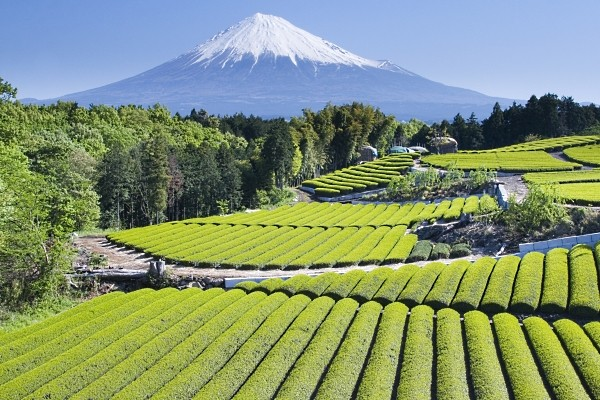 Nature - Circuit Splendeurs du Japon 3* Osaka Japon