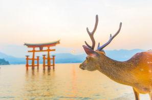 Japon-Tokyo, Circuit FRAM Les Essentiels du Japon & extension Hiroshima