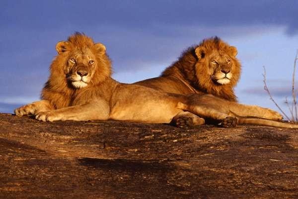 Nature - Circuit Safari Tsavo & Plage de Diani 4* Mombasa Kenya