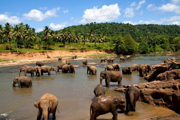 Nature - & Safari Swahili