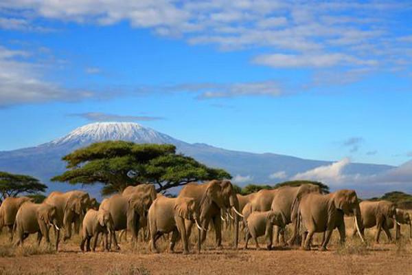 Nature - Circuit Splendeurs du Kenya Mombasa Kenya