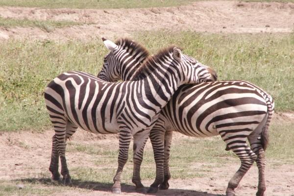 Nature - Safari Swahili 4* Mombasa Kenya