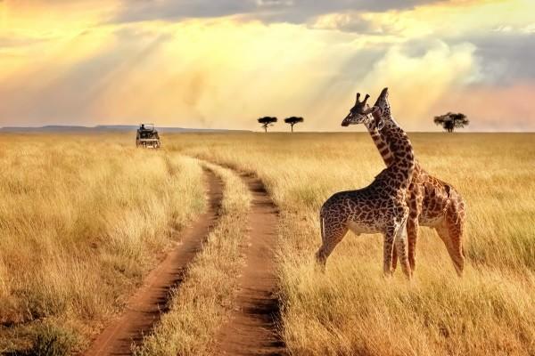 (fictif) - Circuit Evasion Kenyane - Limité à 16 pers 4* Nairobi Kenya