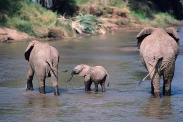 Photo - Indispensable Kenya