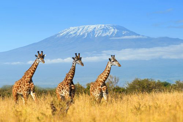 Nature - Circuit Douceurs du Kenya Nairobi Kenya