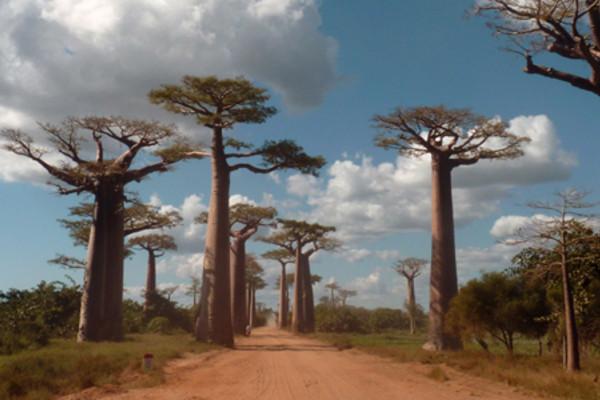 (fictif) - Circuit Madagascar Solidaire en Terre Malgache Antananarivo Madagascar