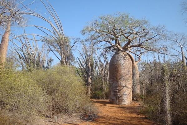Nature - Circuit Madagascar- Circuit sud - Route des milles visages Antananarivo Madagascar