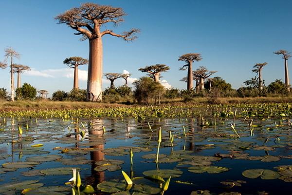 Nature - Circuit Confidentiel Madagascar Antananarivo Madagascar