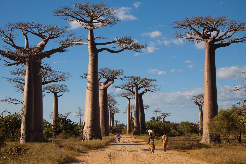 Nature - Circuit Confidentiel Madagascar + Ifaty Antananarivo Madagascar