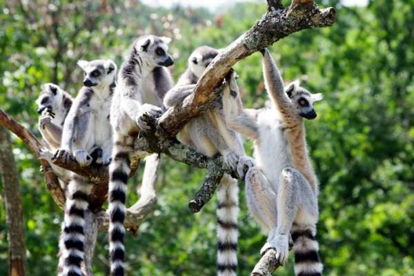 Nature - Nord 13 jours Nosy Be Madagascar