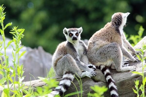 Nature - Combiné circuit et hôtel Splendeurs De Madagascar & Extension Ile Maurice Tamatave Madagascar