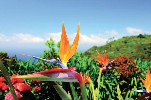 (fictif) - Circuit Visages de Madère du nord au sud 4* Funchal Madère