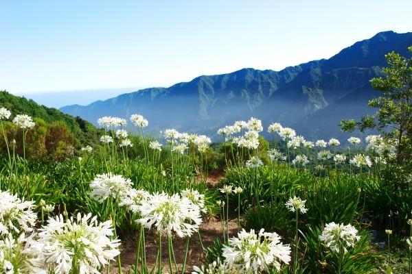 Nature - Circuit Parfums de Madère 4* Funchal Madère
