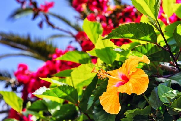 Nature - Circuit Fête des Fleurs à Madère 4* Funchal Madère