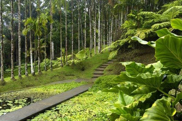 Nature - Circuit Echappée Martinique insolite Fort De France Martinique
