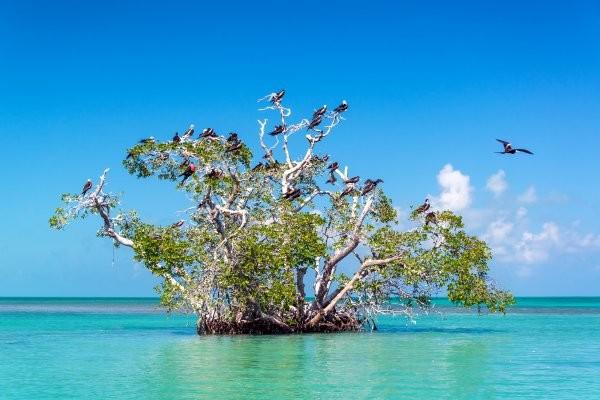 Geographie - Circuit Beautés Mayas et plage des Caraïbes 4* Cancun Mexique