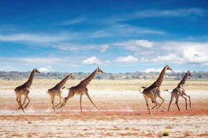 Vacances Windhoek: Circuit Impressions de Namibie