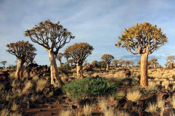 Nature - Circuit Impressions de Namibie + Fish River Windhoek Namibie