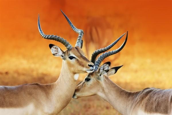 Elans - Couleurs de Namibie et Fish River Canyon