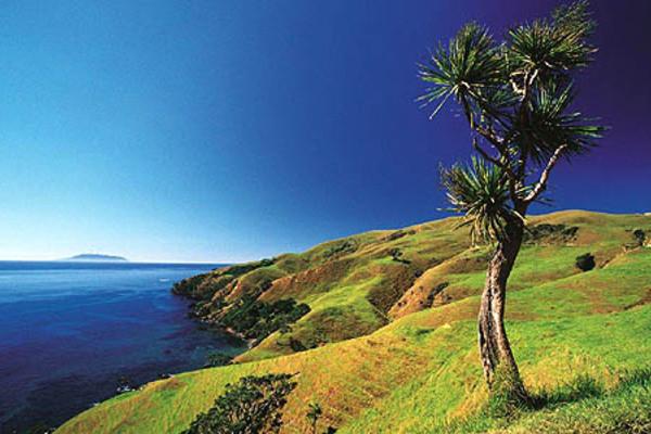 (fictif) - Circuit Premier Regard Nouvelle Zélande Auckland Nouvelle Zelande