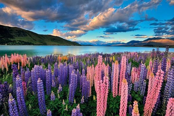 Nature - Circuit Premier Regard Nouvelle Zélande Auckland Nouvelle Zelande