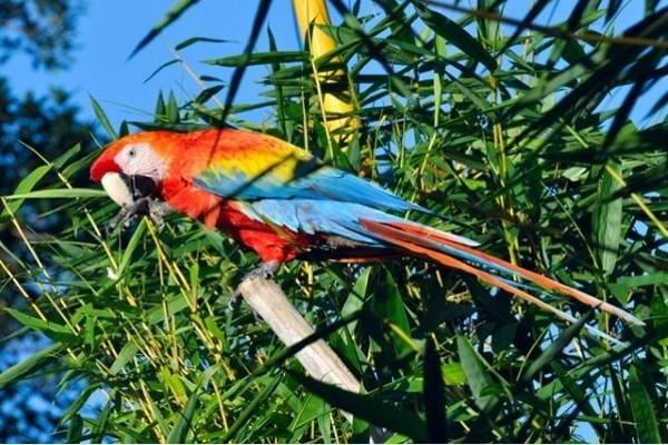 Nature - Circuit Splendeurs du Pérou & Extension Amazonie Lima Perou