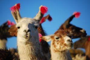 Vacances Lima: Circuit Panorama du Pérou et de la Bolivie