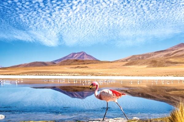 Nature - Circuit Couleurs du Pérou et de la Bolivie Lima Perou