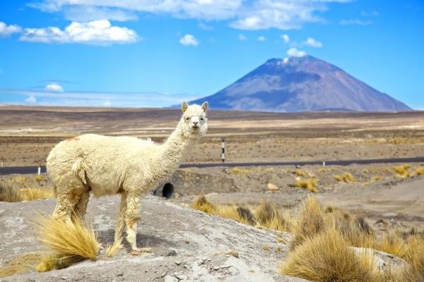 Nature - Circuit Splendeurs du Pérou & Extension Nazca Lima Perou