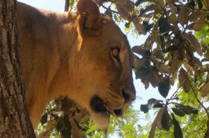 Vacances Dakar: Circuit Lion de Fathala