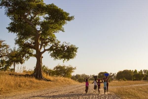 Nature - Circuit Découverte du Siné-Saloum Dakar Senegal