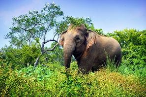 Sri Lanka-Colombo, Circuit Indispensable Sri Lanka